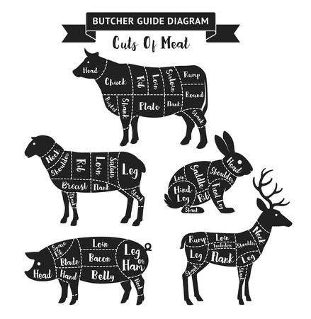 肉屋のガイド図は、肉をカットします。  イラスト・ベクター素材