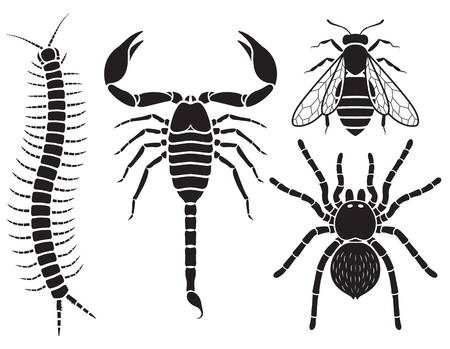 Poisonous insects set. Vector Illustrations.