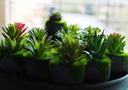 Cactus plant background.