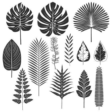 Tropikalny liść sylwetka zestaw ilustracji wektorowych Ilustracje wektorowe