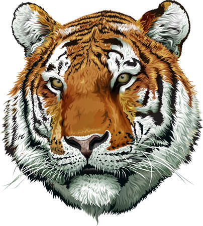 Tiger face color