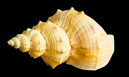 Shell use used as a decoration. The background is black Stock Photo