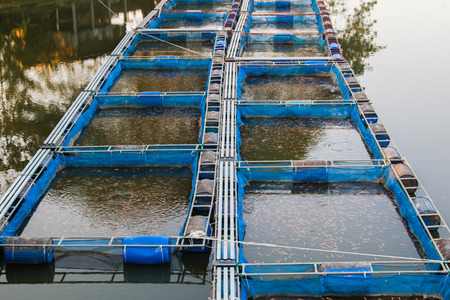 Cages for fish farming in the natural river Stok Fotoğraf - 93932903