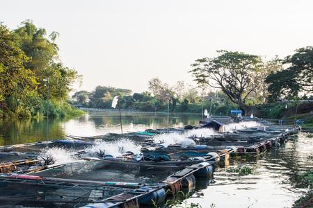 Käfige für Fischzucht im natürlichen Fluss