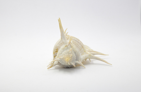 Shell use used as a decoration on white background with copy space
