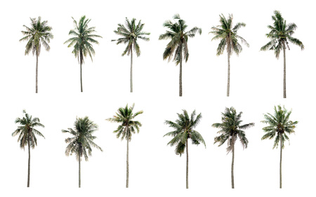 Collection Different Palms coconut the garden isolated on white background Stok Fotoğraf
