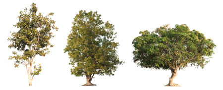 collection of tree in the garden isolated on white background Stock Photo