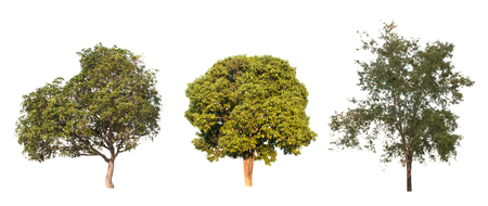 collection of tree in the garden isolated on white background Banco de Imagens