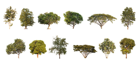 Collection Different of tree in the garden isolated on white background