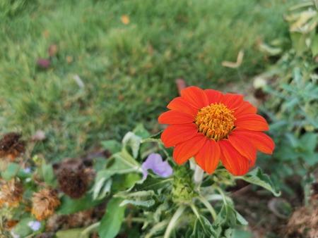 Close-up Orange flowers on green background