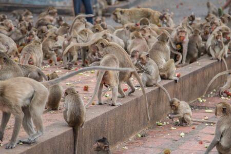 Muchos monos luchan por la comida y la fruta con espacio de copia