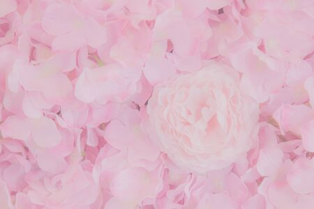 Pink rose petals texture . Abstract background ,Beautiful rose flower petals