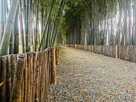 Close-up small pathway surrounded by bamboo trees