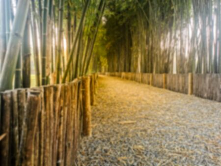 Abstract blur  small pathway surrounded by bamboo trees,abstract blur background 版權商用圖片