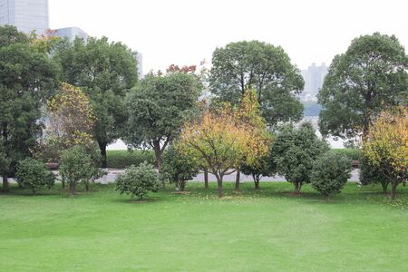 Beautiful  landscape with trees Trees in public park