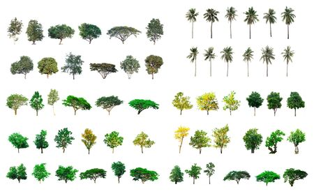 Collect tree species isolated on white background
