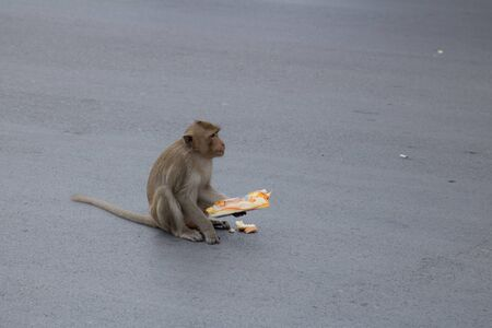 Wild monkeys come out in the road and eating food 版權商用圖片