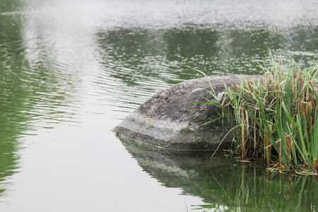 stones and grasses in an environment of water in public park