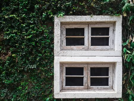 White window ivy wall green wood with copy space