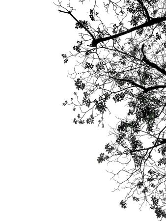 Silhouette leave and Twigs on white background