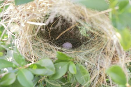 Eggs are in the bird's nest  on the tree in the morning