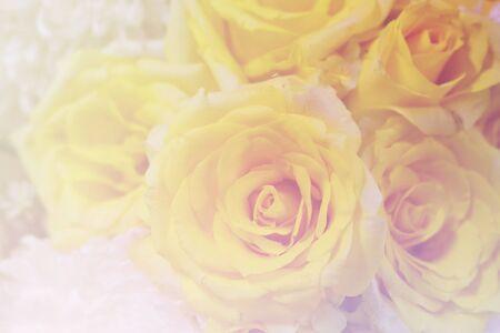 Yellow rose petals texture . Abstract background ,Beautiful rose flower petals 版權商用圖片