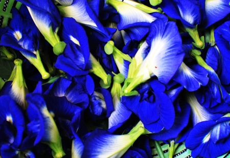 blue flower&herb photo