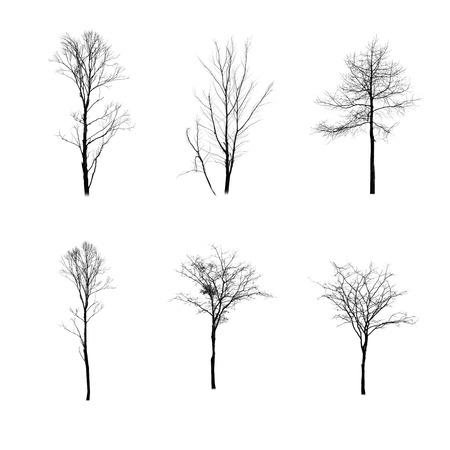 arbres silhouette: Collection d'arbres silhouette sur fond blanc