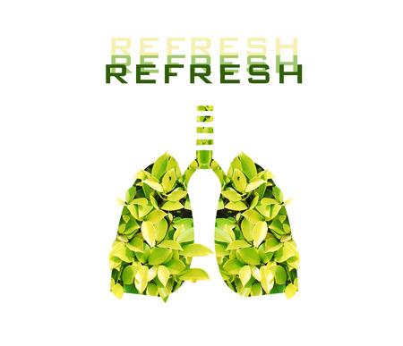 refrescar: Los pulmones verdes en el fondo blanco, refrescar concepto.