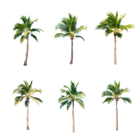 coconut trees on white background Stok Fotoğraf
