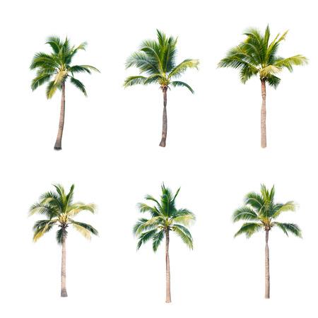 aislado: árboles de coco en el fondo blanco