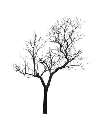 Silueta de árbol muerto aislado sobre fondo blanco.