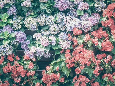 Hydrangea flower close up