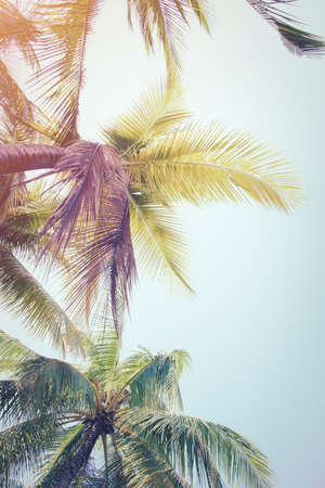 Detail of palm trees green leaf in the wind for summer background ,relax and vacation holiday summer concept