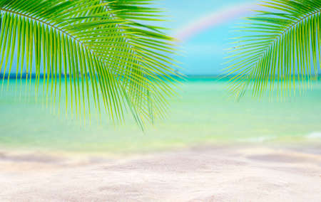 Coconut tree leaf on the tropical beach with space for text , summer,holiday, vacation weekend or relax ,summer mid year sale concept Фото со стока