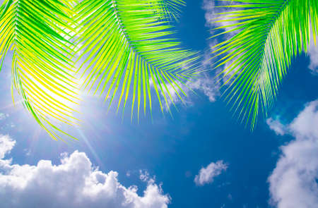 Blue sky background with green coconut palm leaves,and sunshine,relax or holiday season concept