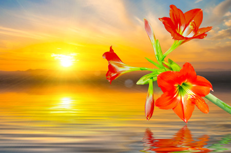 The beautiful of Amaryllis on natural background. photo