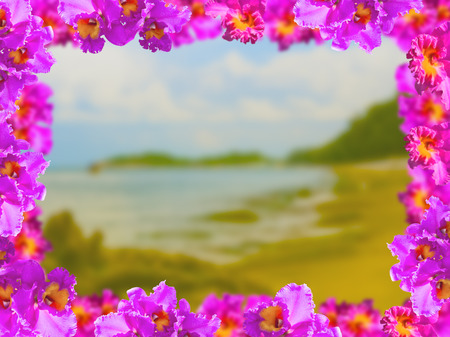 debonair: Frame of Beautiful Pink Orchids on Soft and blurred background.