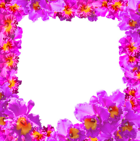 debonair: Frame of Beautiful Pink Orchids on white background.