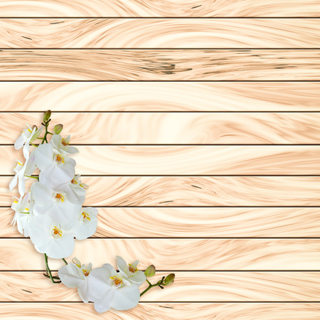 abstact: Abstact Beauty White orchid on wood plank background