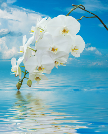 debonair: Beautiful White Orchid on Surface Rippled of water and sky background
