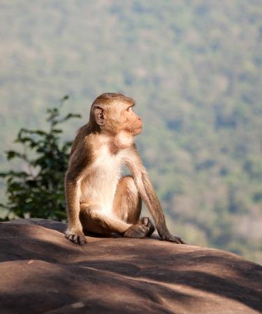 atmosfera: Mono en el refrescante ambiente brillante amanecer en la cima de la colina