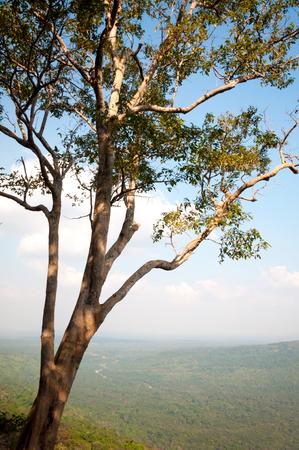atmosfera: refrescante atmósfera brillante amanecer en la cima de la colina