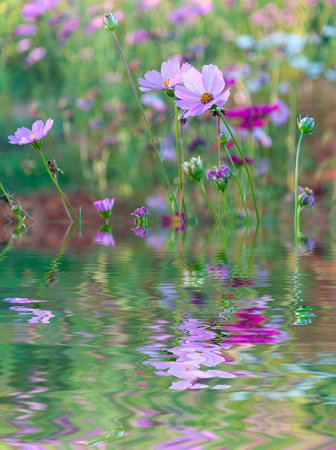 Water Ripple and reflections of Flora on water with beauty natural background