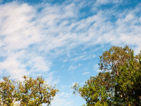 atmosphere: The atmosphere of White Clouds and Blue Sky background