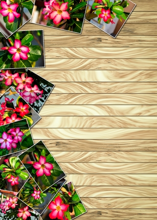 adenium obesum: Concept Stack Photographs of Adenium obesum on wood plank background Stock Photo