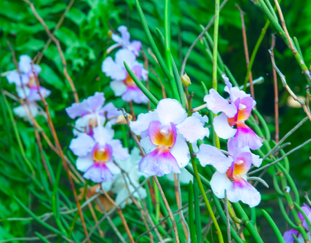 Beauty Colorful Orchids on soft natural background Stock Photo