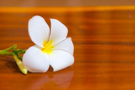 Beauty of White Plumeria Pudica flora on wood
