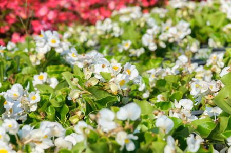 Colorful blossom of beautiful flowers background