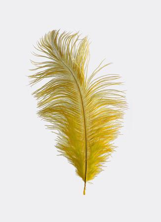 ostrich: Pluma de avestruz amarillo aislado Foto de archivo